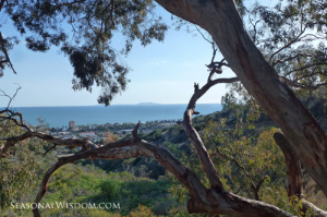 Ventura Botanical Gardens view of city and ocean