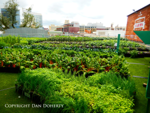 Side view of Fenway Farms in Boston