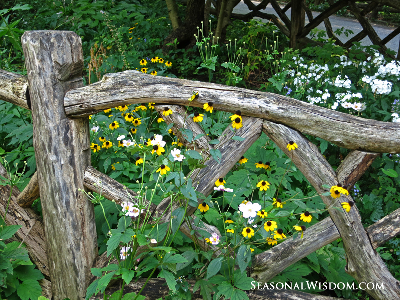 wildflowers at fence shakespeare garden central park - Shakespeare Garden Central Park