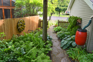 Shady side yard with two living walls