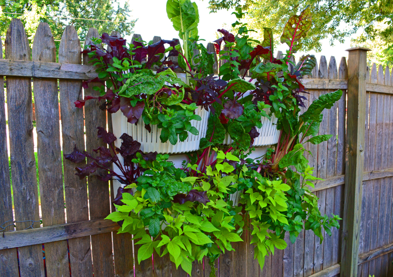 Living Wall With Herbs And Vines