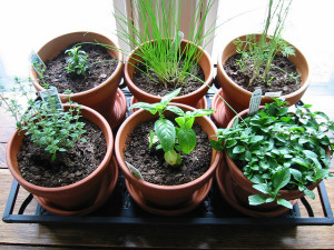 herb garden for winter kitchens