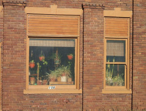houseplants fill winter apartment window