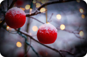 christmas berries by jennifer donley
