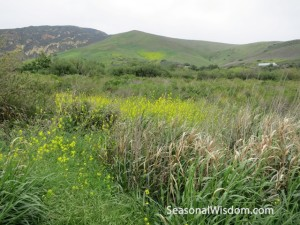 wildflowers near gaviota