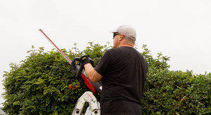 Troy-Bilt cordless hedge trimmer on cape honeysuckle