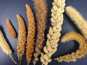 Millets_4624_Millet diversity-small