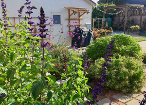 Sage and vegetable garden