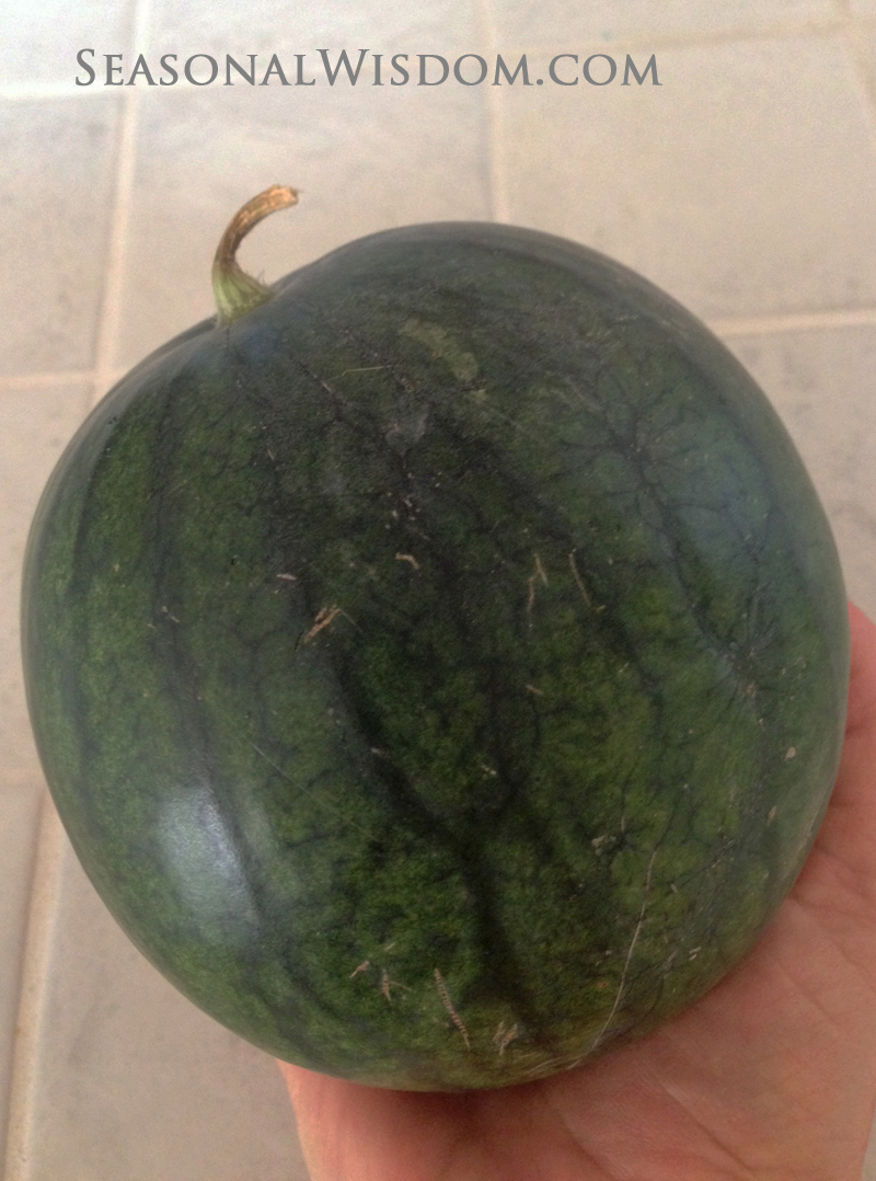 Watermelons Available To Grow Sugar Baby Watermelon